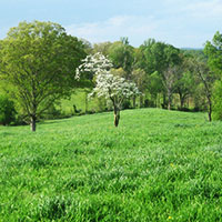 SumaGrow treated forage field in Virginia